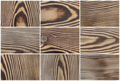 Larch tree wood textures — Stock Photo