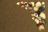Snäckskal på sand. sommaren beach bakgrund. ovanifrån — Stockfoto