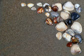 Sea shells on sand. Summer beach background. Top view — Stock Photo