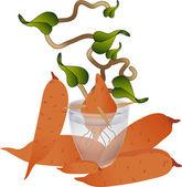 Yam Plant — Stock Vector