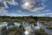 Scenic landscape Florida Everglades — Stock Photo