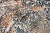 Mud, Bootprint — Stock Photo