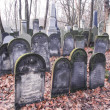 Warsaw Jewish Cemetery — Stock Photo #45799017