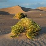 Sand Dunes along the Amargosa Desert at sunset — Stock Photo