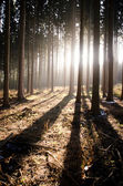 Trees on sunny day in autumn forest with shadow — Foto Stock