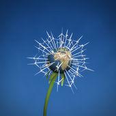 Wind turbine Earth flower — Stock Photo