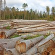 Stock Photo: Logs in logging