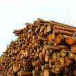 Logging — Stock Photo