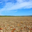 Stock Photo: Arable land