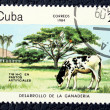 Postage stamp with the image of a cow — Stock Photo #17981777