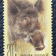 Postage stamp with the image of a wild boar — Stockfoto