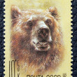 Postage stamp with the image of a brown bear — Stock Photo