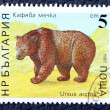 Postage stamp with the image of a brown bear — Stockfoto