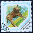 Postage stamp with the image of a young calf — Stockfoto
