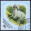 Postage stamp with the image of a young sheep — Stockfoto