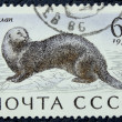 Postage stamp with the image of a sea ape — Stockfoto