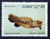 почтовая марка с изображением черепахи. — Стоковое фото