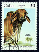 Postage stamp with the image of a mule — Stock Photo