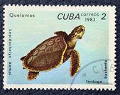 Francobollo con l'immagine di una tartaruga. — Foto Stock