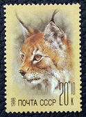 Postage stamp with the image of a lynx — Stock Photo
