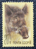Postage stamp with the image of a wild boar — Stok fotoğraf