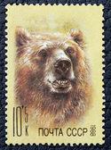 ヒグマのイメージで郵便切手 — ストック写真