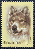Postage stamp with the image of a wolf — Stock Photo