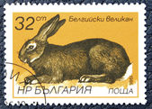 Postage stamp with the image of a hare. — Stock Photo