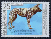 Postage stamp with the image of a hyena. — Stock Photo