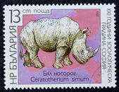 Postage stamp with the image of a white rhino. — Photo