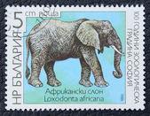 Francobollo con l'immagine di un elefante africano. — Foto Stock