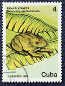 Postage stamp with the image of a frog — Stock Photo
