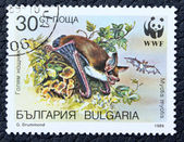 Postage stamp with the image of a bat — Stock Photo