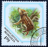 Postage stamp with the image of a piglet wild boar — Stock Photo