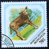 Postage stamp with the image of a young calf — Stok fotoğraf