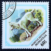 Postage stamp with the image of a young goat. — Stock Photo