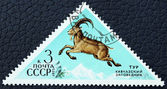 Postage stamp with the image of a mountain aurochs. — Stock Photo