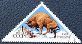 Postage stamp with the image of a European bison — Stock Photo