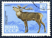 Postage stamp with the image of a Manchurian deer — Stock Photo