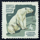 Postage stamp with the image of a big polar bear — Stock fotografie
