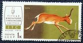 Francobollo con l'immagine di un'antilope — Foto Stock