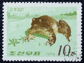 почтовая марка с изображением лягушки — Стоковое фото