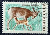 鹿のイメージで郵便切手 — ストック写真
