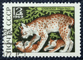 Postage stamp with the image of a lynx and kittens — Stock Photo