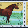 Postage stamp with the image of a horse — Stockfoto