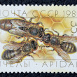 Postage stamp with the image of a bees — Stock Photo
