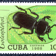 Postage stamp with the image of an insect — Stock Photo