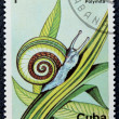 Postage stamp with the image of the snail. — Stock Photo