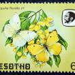 Postage stamp with the image of a butterflies — Stockfoto