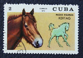 Postage stamp with the image of a horse — Stock Photo
